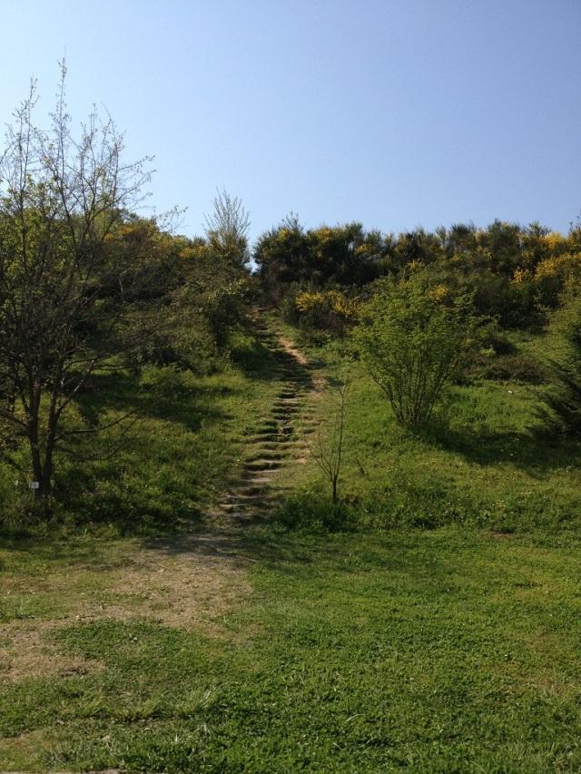 arboretum (17)
