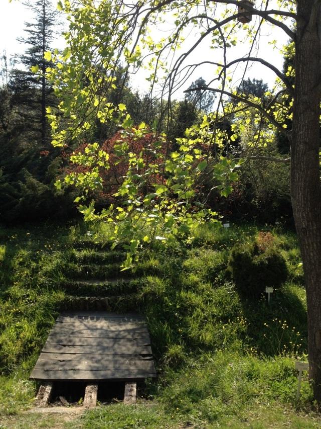 arboretum (54)