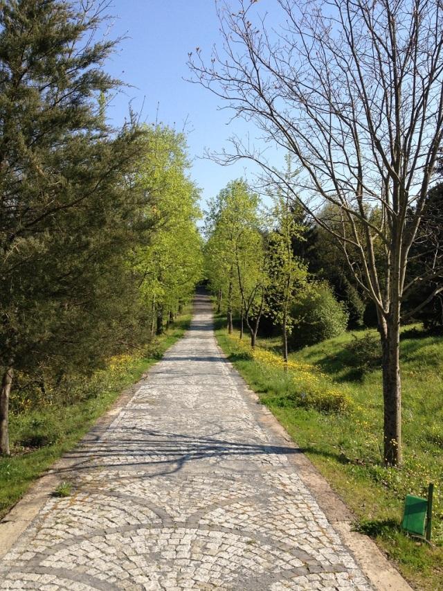 arboretum (58)