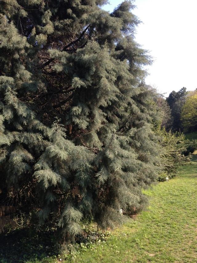 arboretum (77)