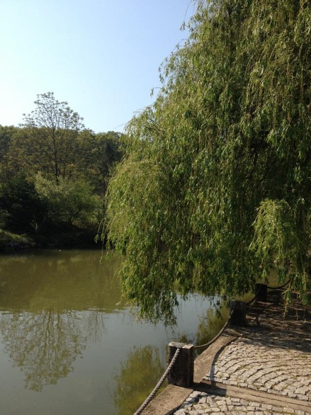 arboretum (8)