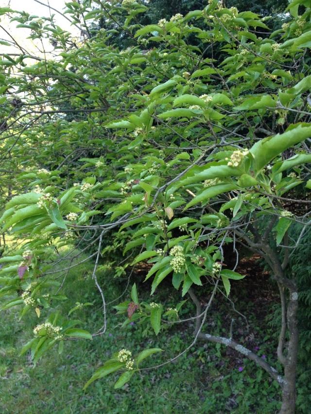 arboretum (84)