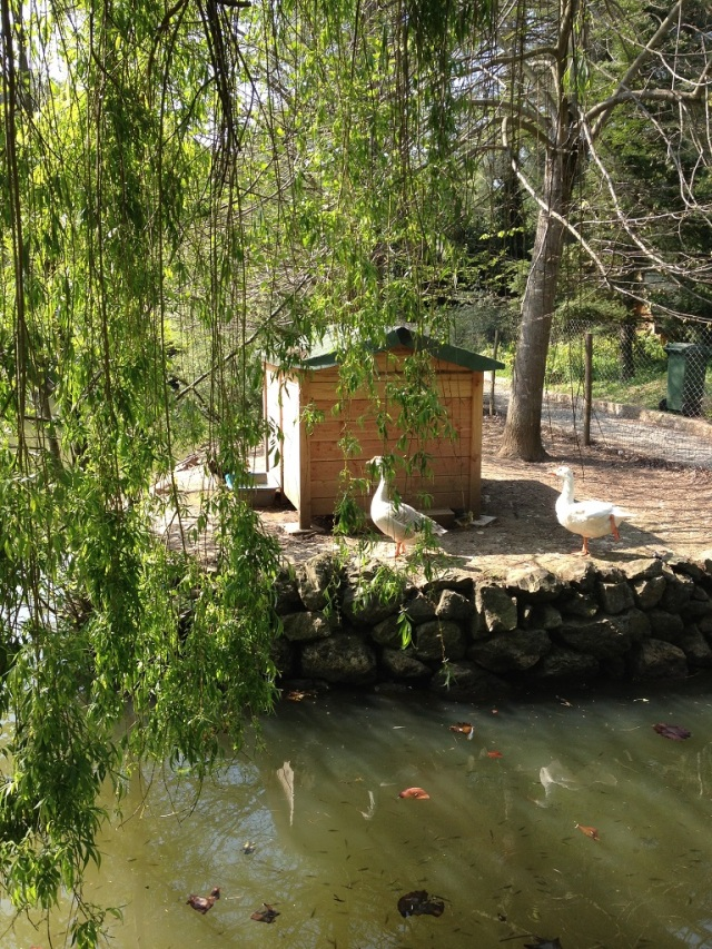 arboretum (9)