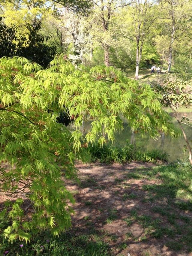 arboretum (90)