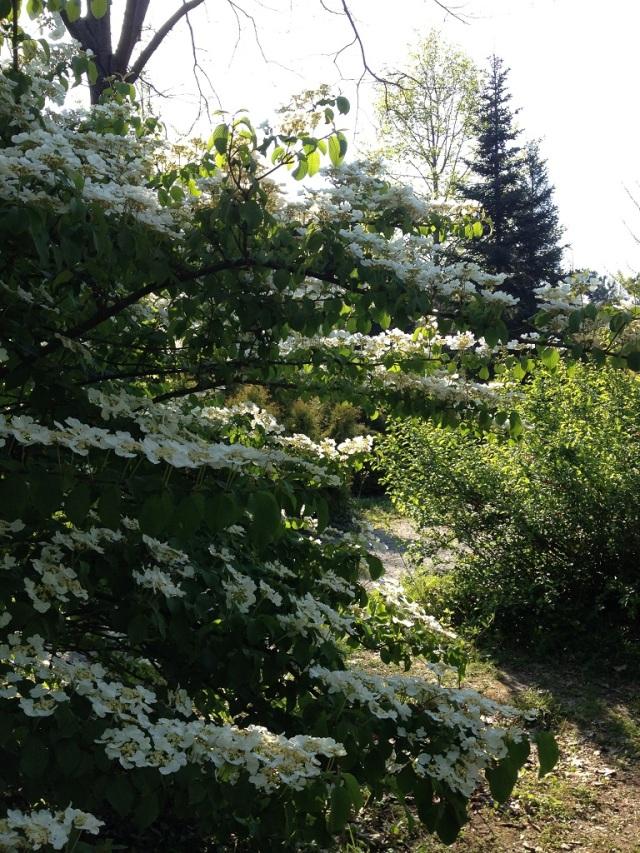 arboretum (93)