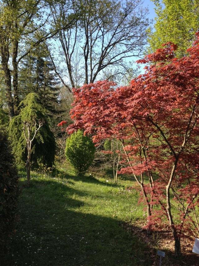arboretum (95)