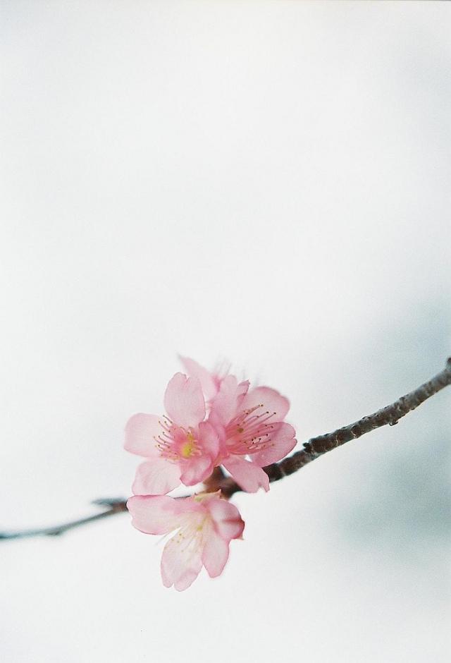 flowers-cicekler (10)