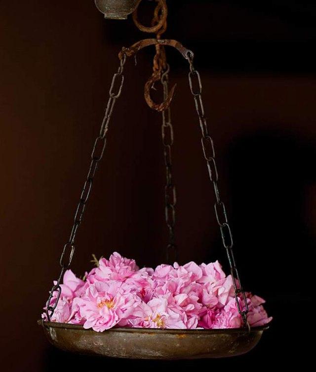 flowers-cicekler (12)