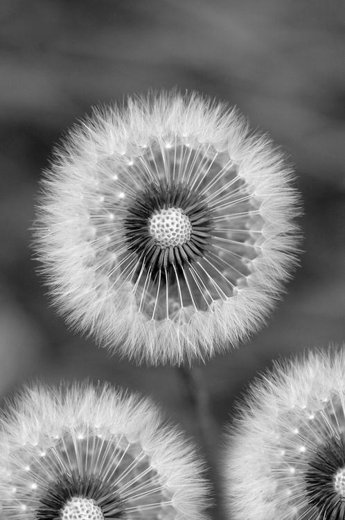 flowers-cicekler (13)