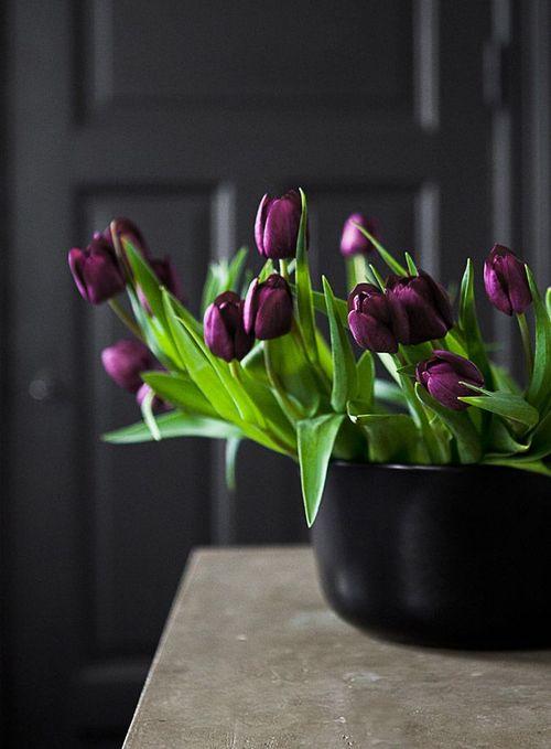 flowers-cicekler (18)