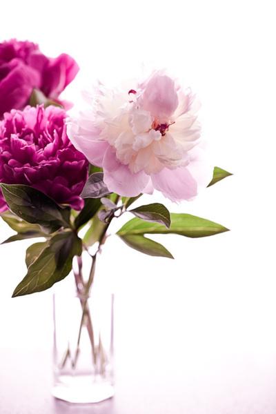 flowers-cicekler (19)