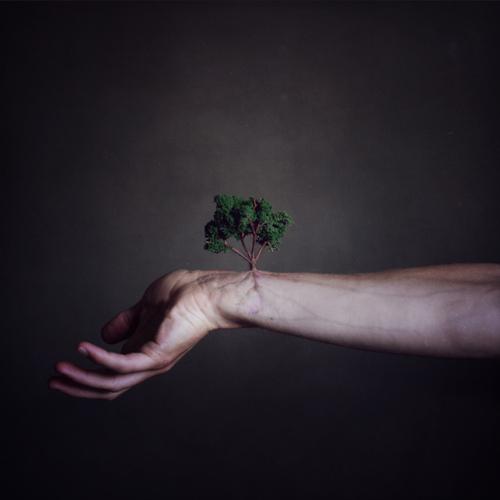 flowers-cicekler (2)