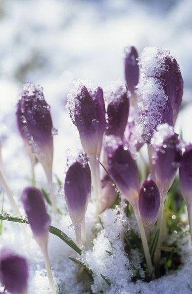 flowers-cicekler (34)