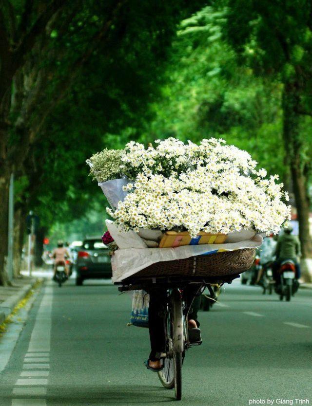 flowers-cicekler (35)