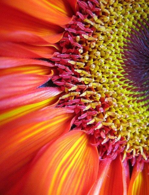 flowers-cicekler-45