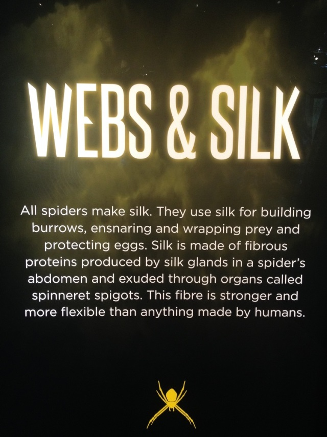 spiders-alive-and-deadly-100