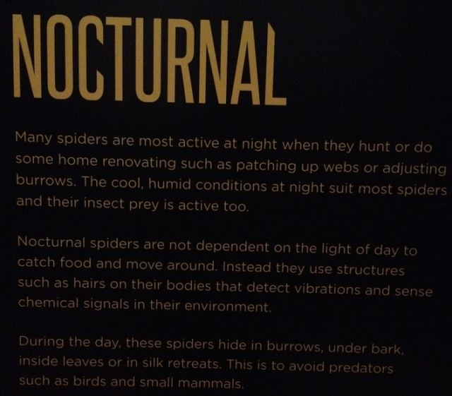 spiders-alive-and-deadly-111