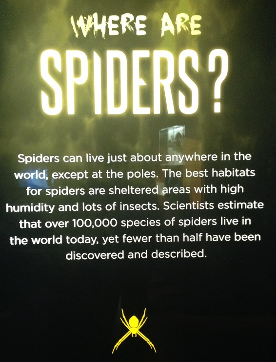 spiders-alive-and-deadly-26