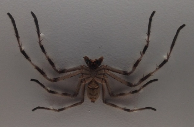 spiders-alive-and-deadly-34