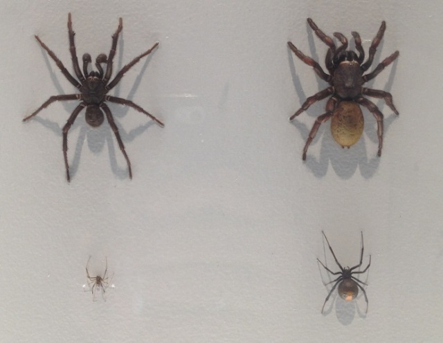 spiders-alive-and-deadly-39
