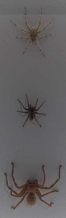 spiders-alive-and-deadly-44