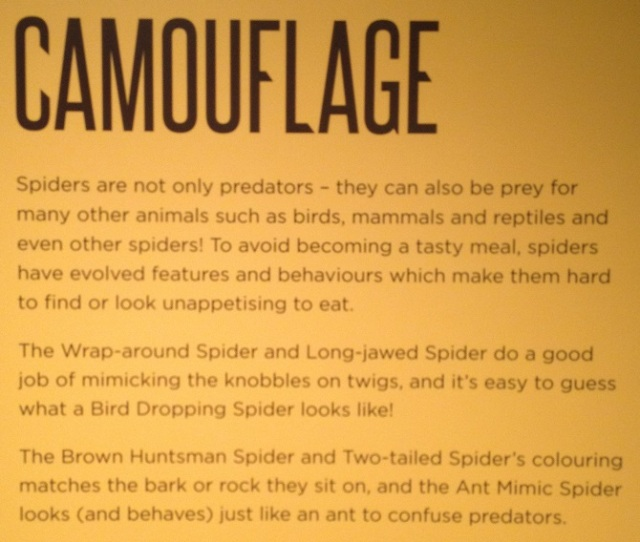 spiders-alive-and-deadly-51