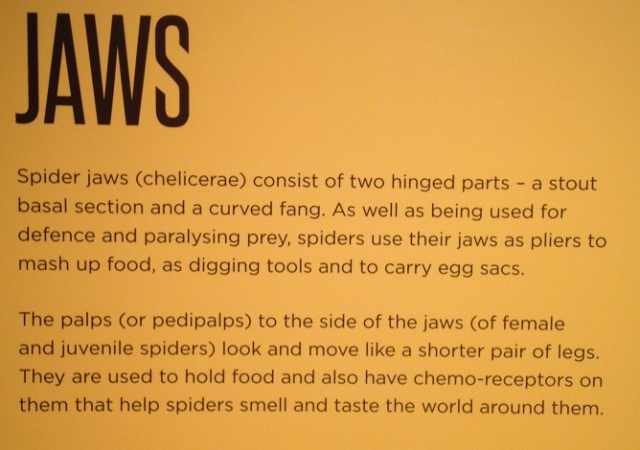 spiders-alive-and-deadly-67