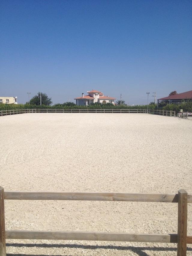 B.Equine-club (10)