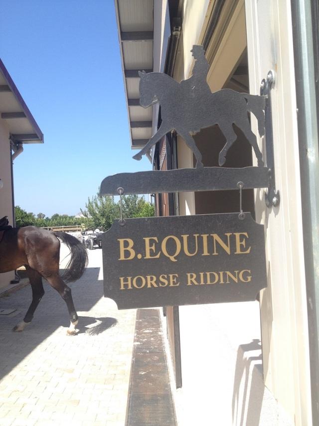 B.Equine-club (17)