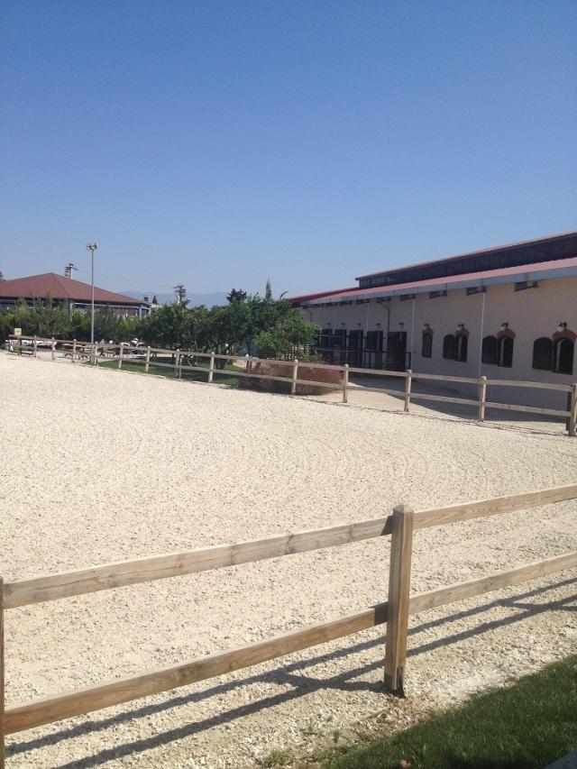 B.Equine-club (9)