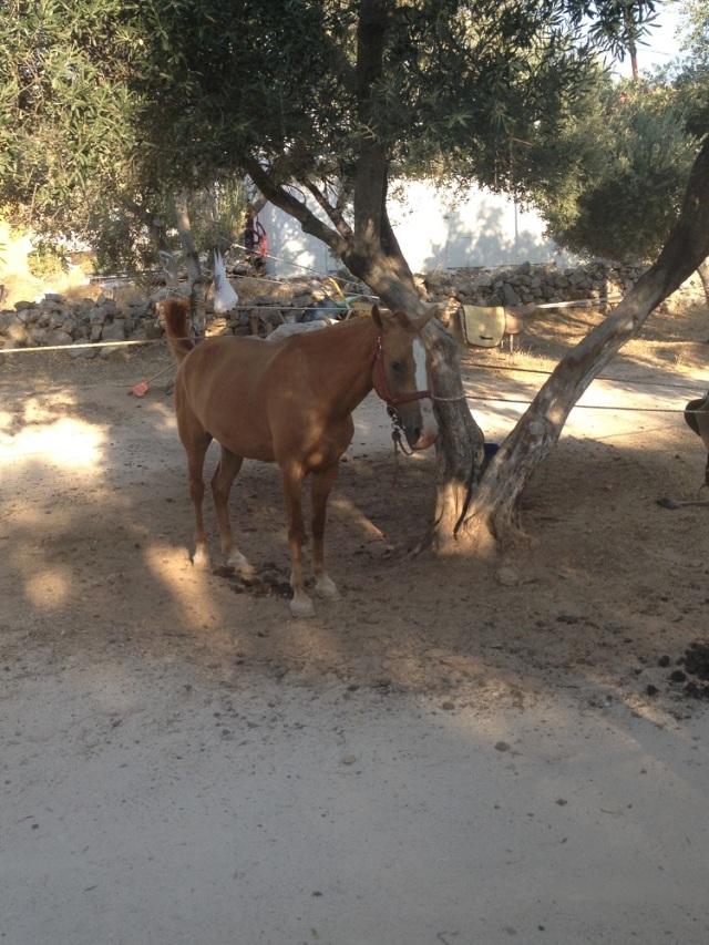 yasar-babanin-ciftligi (24)