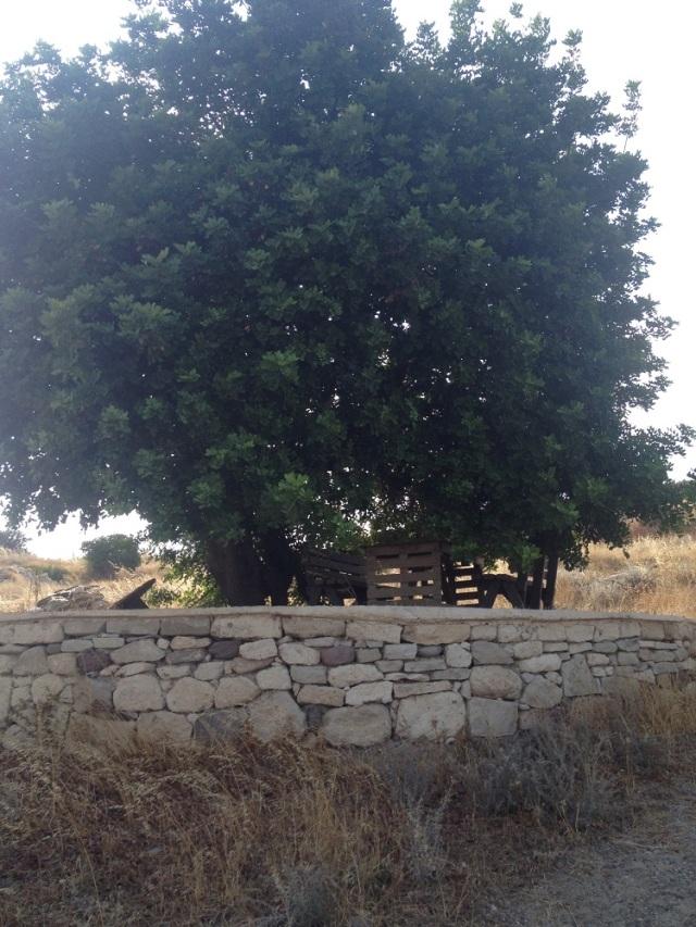 Vadi-Alacati (15)