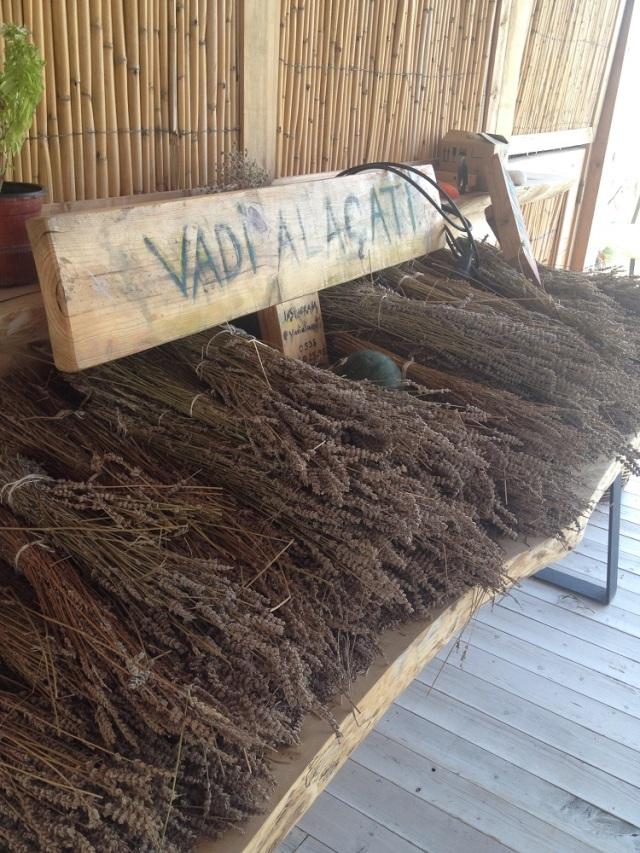 Vadi-Alacati (6)