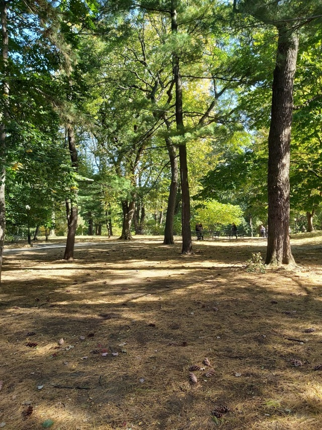 central-park-2019 (19)