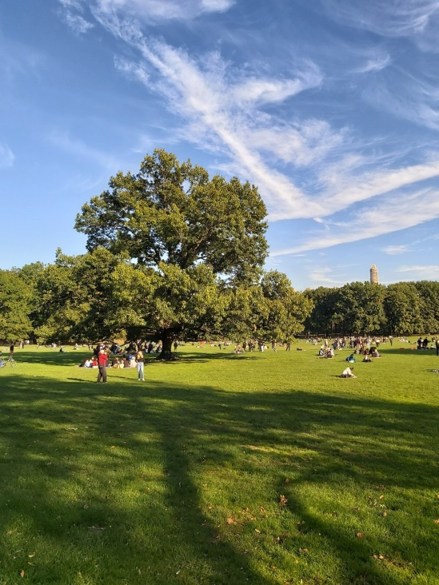 central-park-2019 (33)
